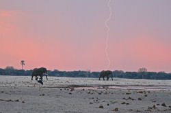 Ngamo dry season - First rains arrive in a very parched Hwange.jpg