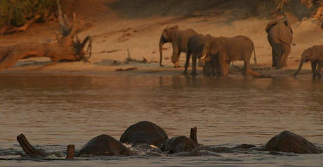botswana northern highlights photographic safari letaka safaris.jpg