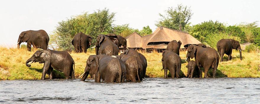 african safari botswana desert delta.jpg