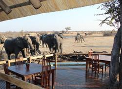Nehimba - elephants in camp.jpg