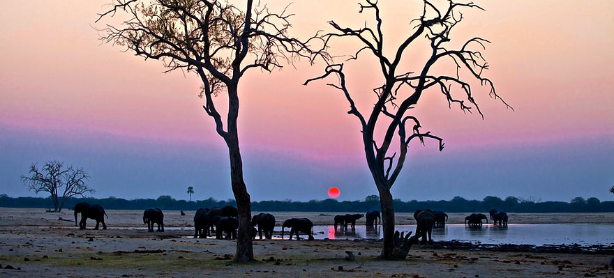 11 -Camelthorn - Elephants at sunset on game drive.jpg
