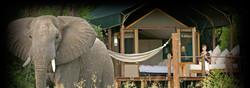african safaris botswana stanley camp.jpg
