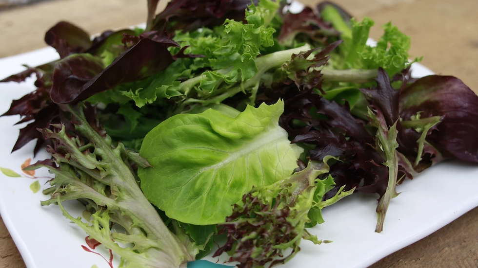 Spring Greens Salad Mix