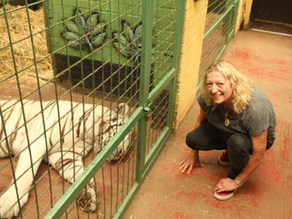 White Tiger Experience