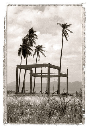 Thailande - palmiers