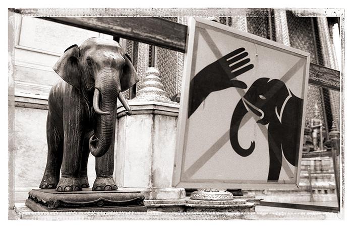 Thailande - elephant