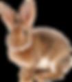RabbitCutout.png