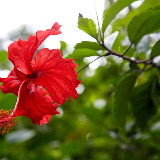Beautiful nature of Costa Rica