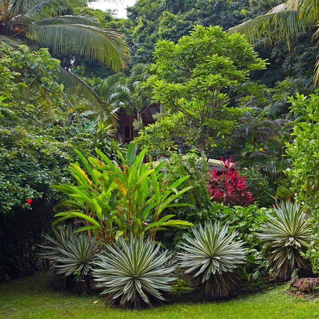 Hotel Entre Dos Aguas, tropical garden, Costa Rica