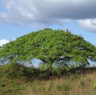 beautiful sights guanacaste