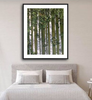 Green Birches in room SOLD