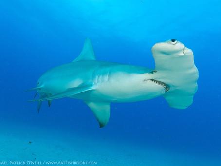 'Meet Me Underwater' — A Photographer's Breathtaking Journey through Florida's Aquatic Wonders