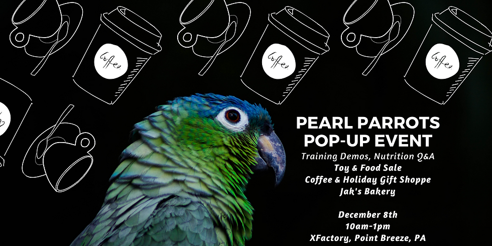 Coffee with PEARL Parrots - Pop Up Event