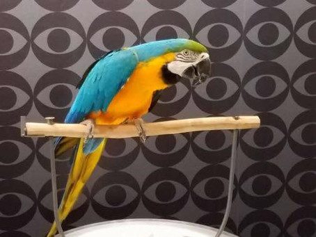 PEARL Parrots on TV!