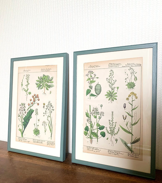 A Pair of German Plant Lithograph's, 1883