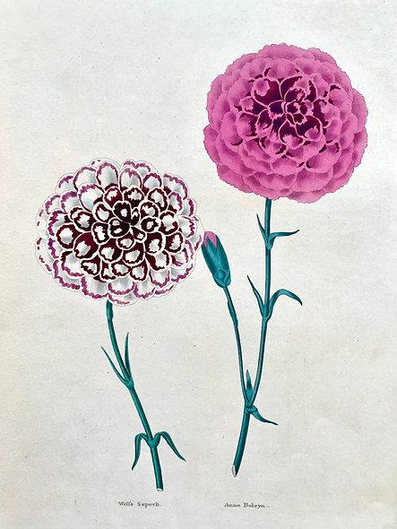 Frederick W. Smith Flower engraving, 1836