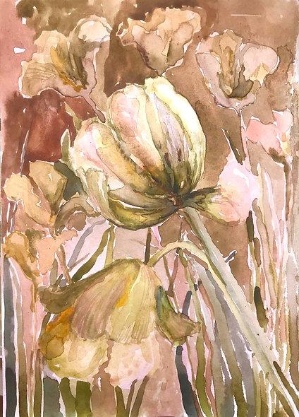 Beatrice Hasell-McCosh, 'Tulip Study III' 2020