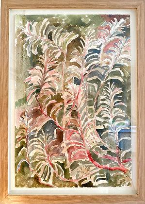 Beatrice Hasell-McCosh, 'Euphorbia II' 2020