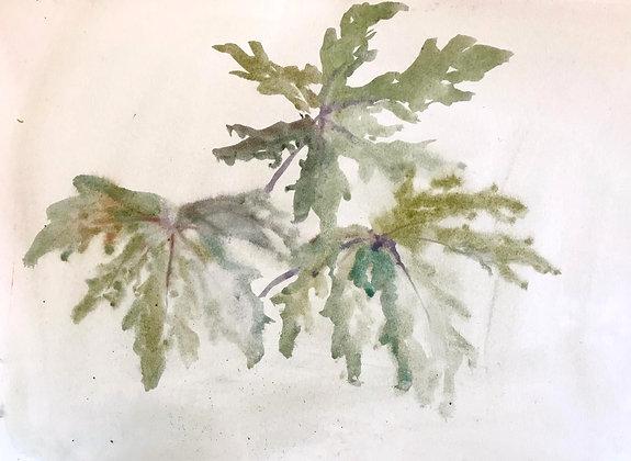 Beatrice Hasell-McCosh, 'Leaf Study' 2020