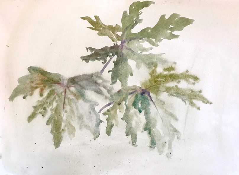 Beatrice Hasell-McCosh, 'Leaf Study' 2020