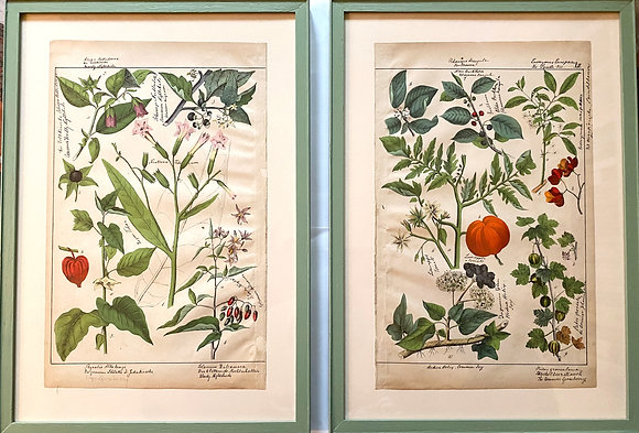 A Pair of German Plant Lithographs, 1883