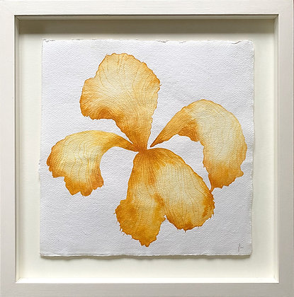 Jess Wheeler, 'Golden Iris' 2021