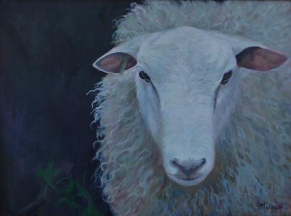 Siegfried's Sheep