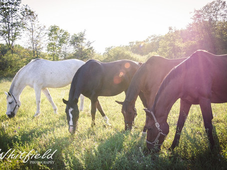 Horse education- it's time has come