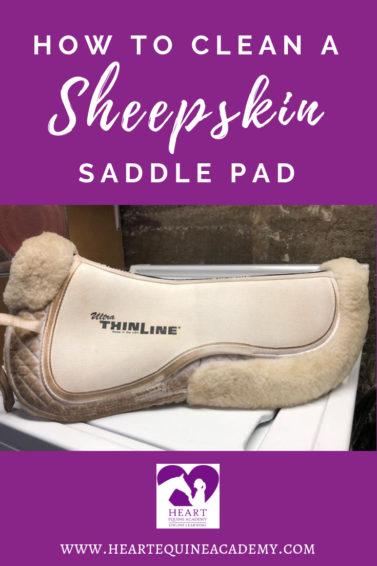 How to Clean a Sheepskin Saddle Pad