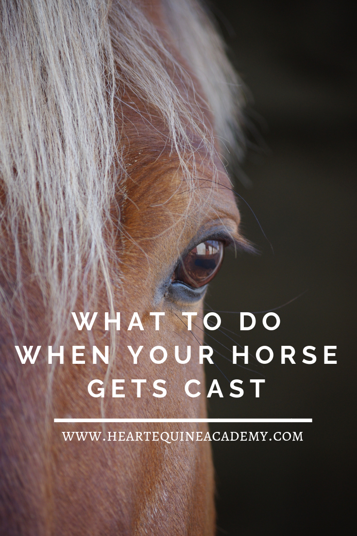 What to Do When Your Horse Gets Cast