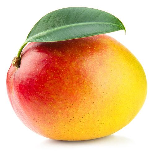 Mango convencional