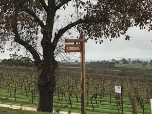 Top 5 South Australian wine areas