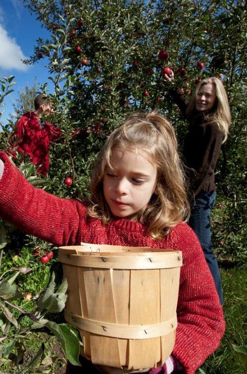 the apple pie trail