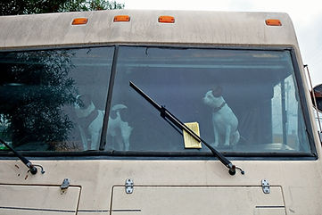 Dogs in the front of a Recreational Vehi