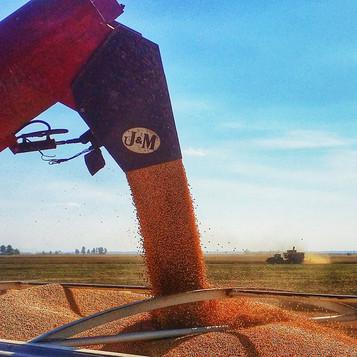 #farmlife #ag #rives #soybeans #missouri