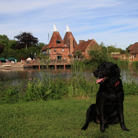 Dog-friendly Horne's Place Oast.JPG