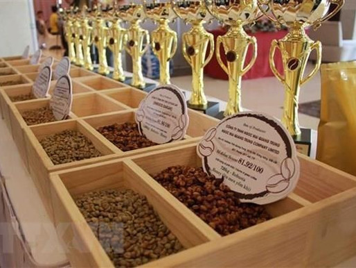 Aspettative promettenti per gli esportatori di caffè vietnamiti nel 2021
