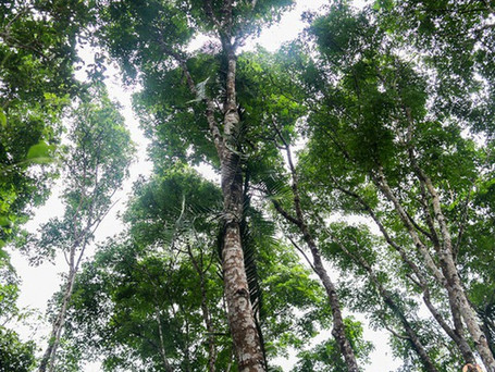 Carbon trading - A push to promote forest protection, sustainable economic development