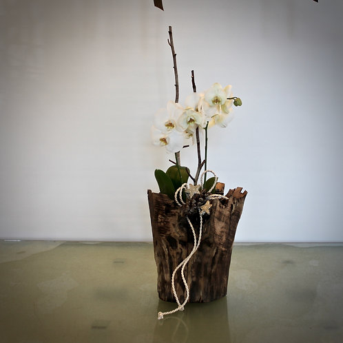 Holzgefäß mit Orchidee