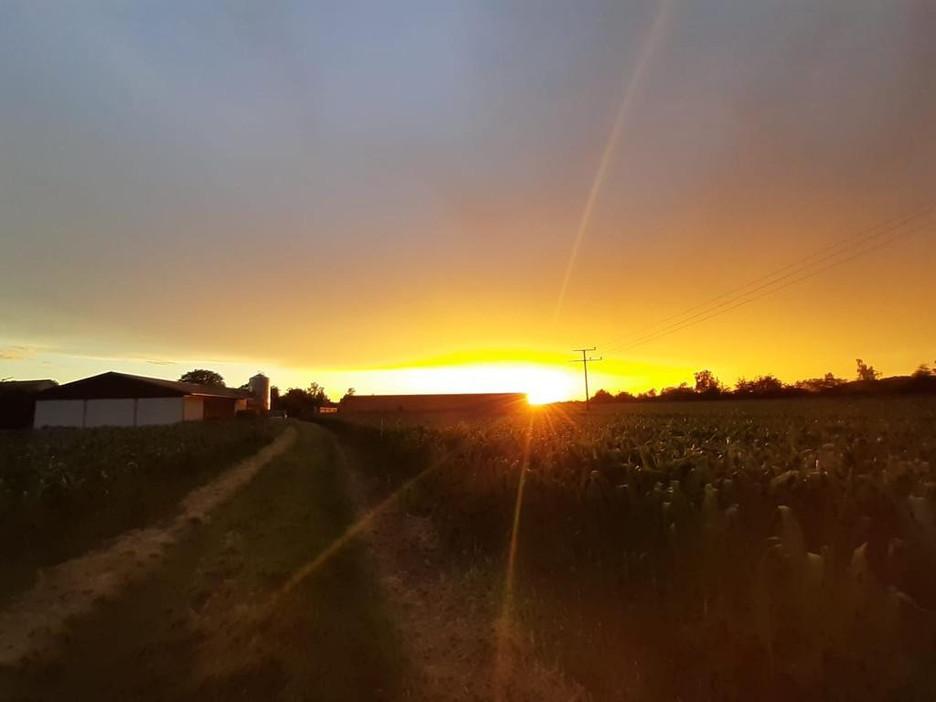 Sonnenuntergang%20am%20Hof_edited.jpg