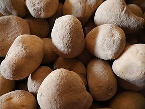 frische Kartoffeln vom Feld
