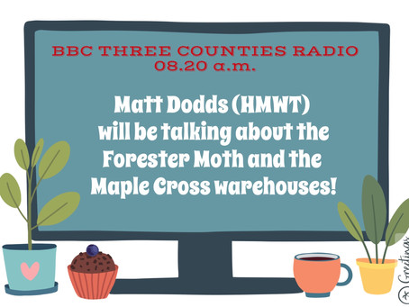 FORESTER MOTH & THE MAPLE CROSS WAREHOUSES