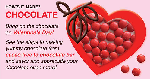 Field trip_how is chocolate made.jpg