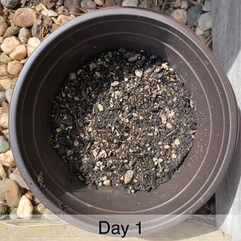 Plant Challenge Day 1.jpg