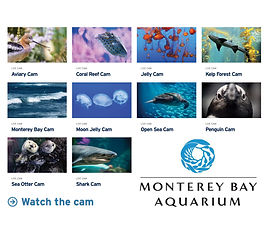 Monteray Bay Aquarium
