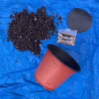 Planting%20kid_edited.jpg