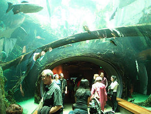 SFAcademyofSciences_aquarium-1.jpg
