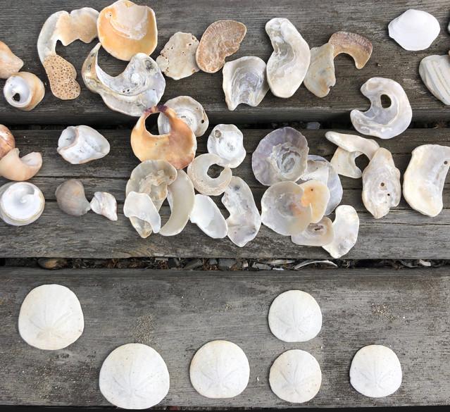 Shells at Stinson.jpeg
