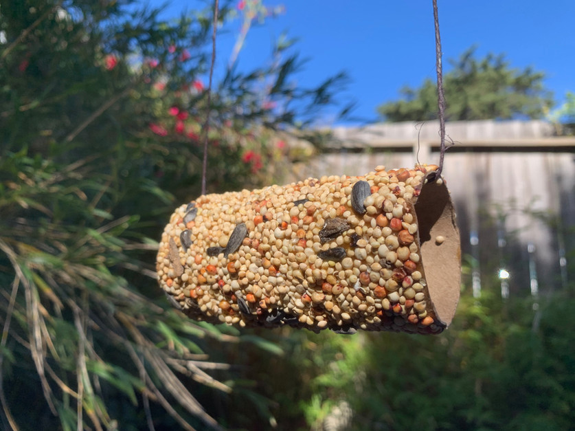 Bird feeder-4.jpeg