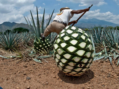 Notre ami le sirop d'agave!